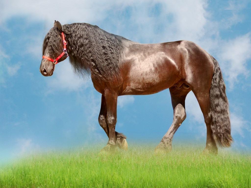 Must see Wallpaper Horse Pinterest - bb8fa65978feb99a42e3de87f58d9590  2018_883946.jpg