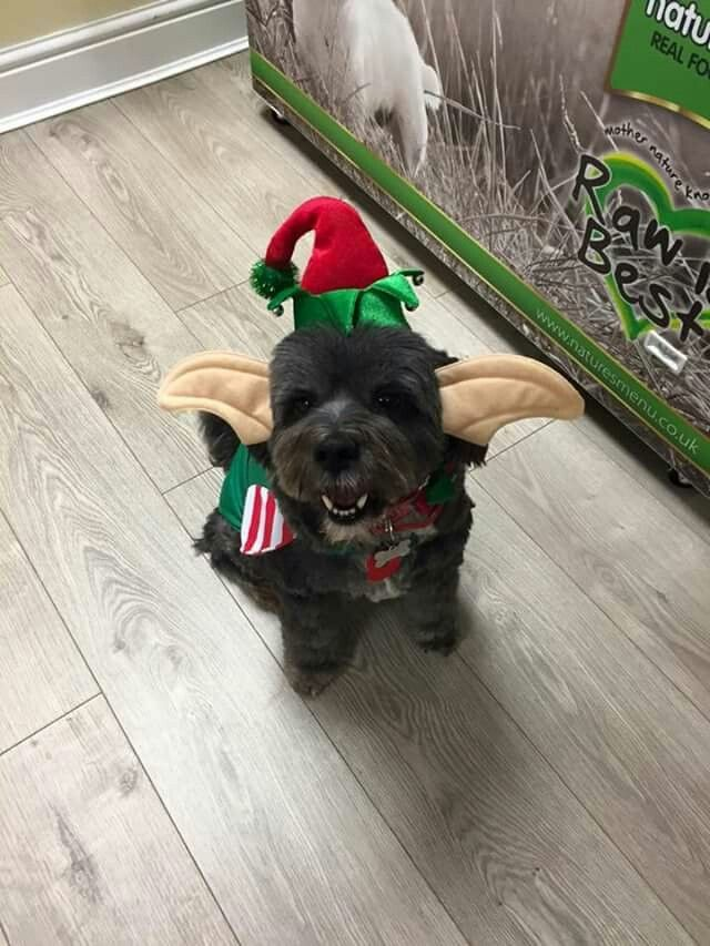 Bobby ready for Christmas