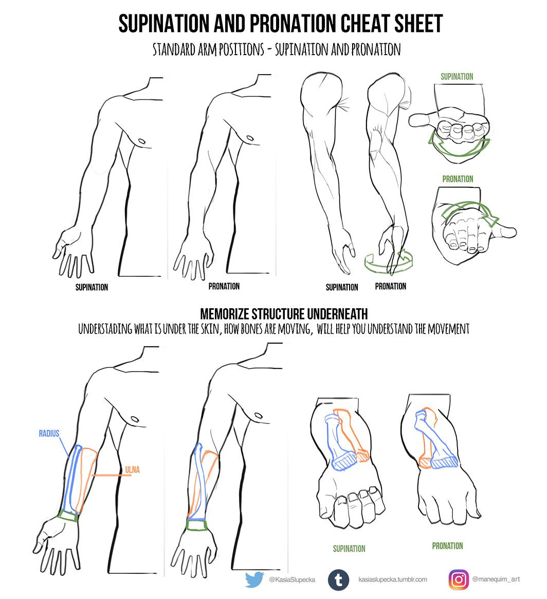 Supination And Pronation Cheat Sheet Arms Arm Foreshortening