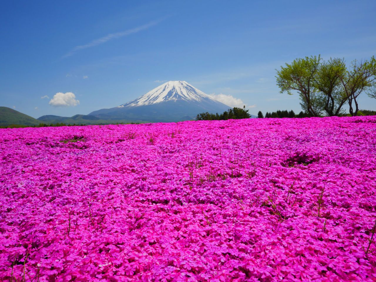 We Re Tickled Pink By These Mesmerizing Flower Fields Beautiful