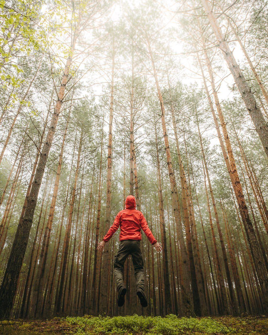 юбилей, день как получить хорошие фотографии в лесу качественная мягкая