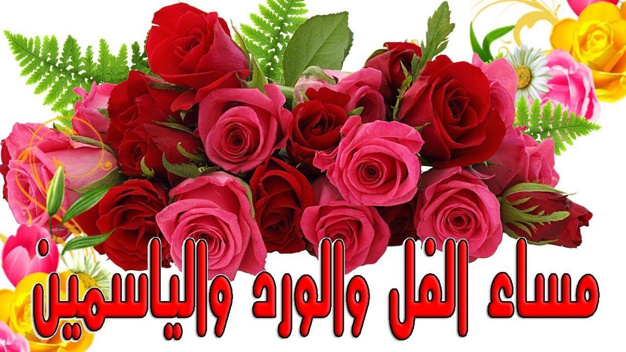 مساء الفل والورد والياسمين Rose Flowers Plants
