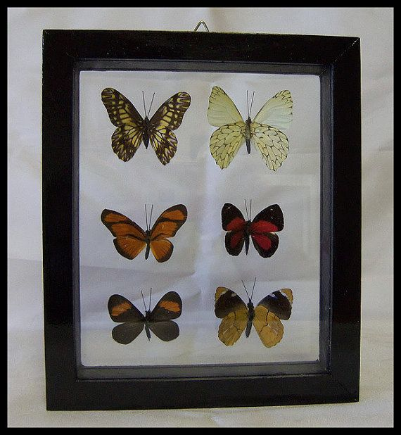 Brilliant Six Specie Framed Butterflies Wall by timelessdesigns07