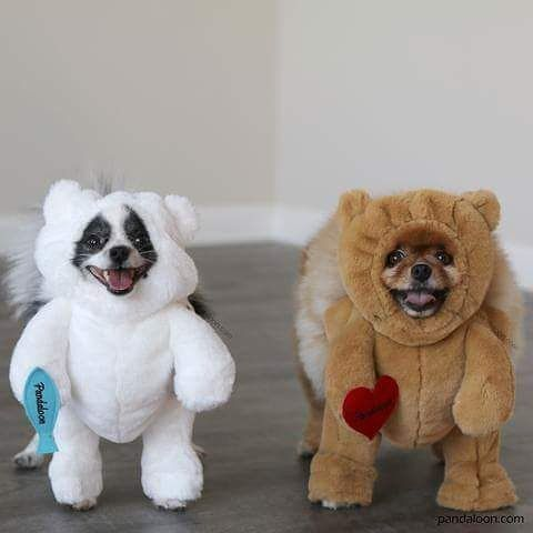 Walking Polar Teddy Bear Dog And Pet Costume As Seen On Shark