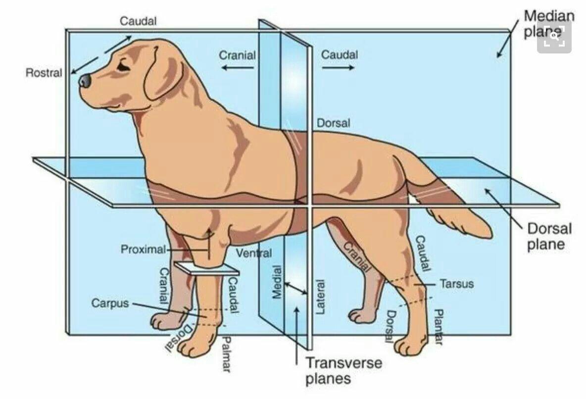 Good chart   for work   Pinterest   Ast und Tier
