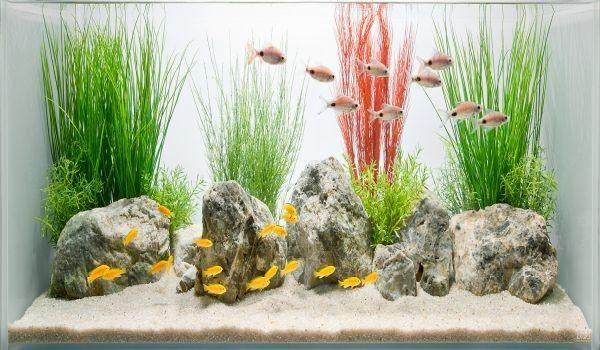simple and stylish fish tank design african cichlid aquarium ideas