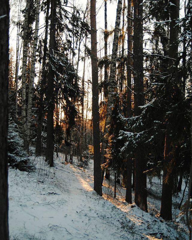 А мы начали новый год с небольшого приключения в волшебном лесу:) Надеюсь, что год будет таким же светлым и активным, как этот день!❄ We started the new year with a little adventure in a magical forest :) I hope that the year will be as bright and active as this day. #vscocam #vsco #vscorussia #landscape #forest #wood #winter #snow #mistery #fairytale #liveadventure #sun #liveautentic #livefolk #adventure #travel #nature #January #wild