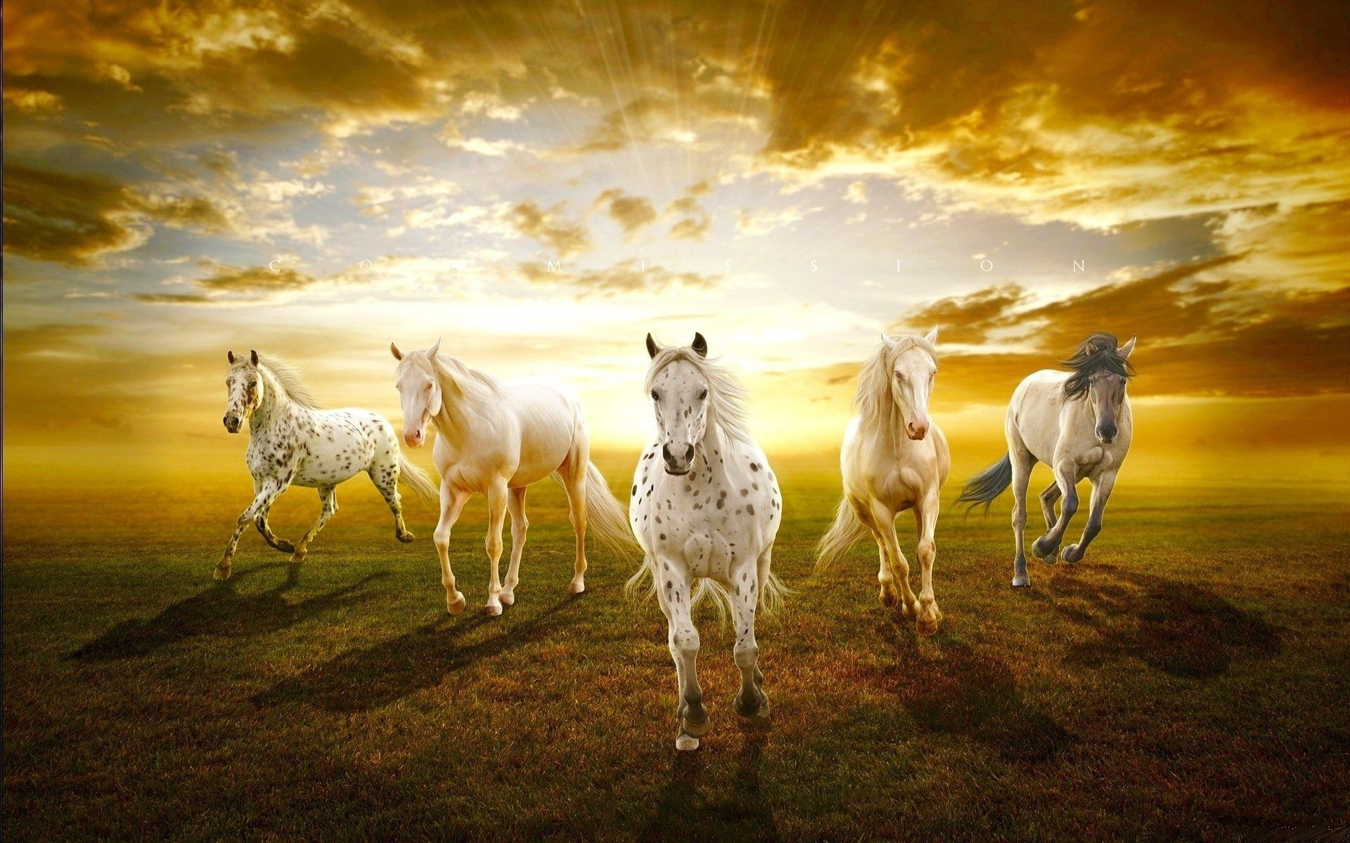 beautiful horses in sunset hd wallpaper for desktop and mobile free