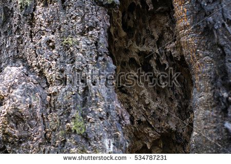 Forest Tree Bark, Tree Skin ( Art of Nature ) Abstract Image, Background, Pattern