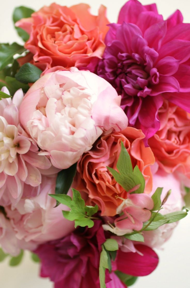 ZsaZsa Bellagio – Like No Other   Flowers, Flower and Peony