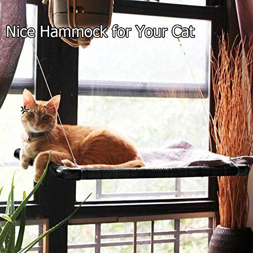 Surprising 9Oine Best Cat Window Perch Hold Up To 50Lbs 100 Safe Cat Andrewgaddart Wooden Chair Designs For Living Room Andrewgaddartcom
