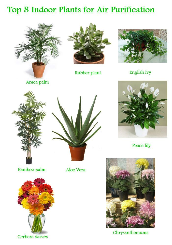 Superieur Garden Ideas · Top 8 Indoor Plants ...