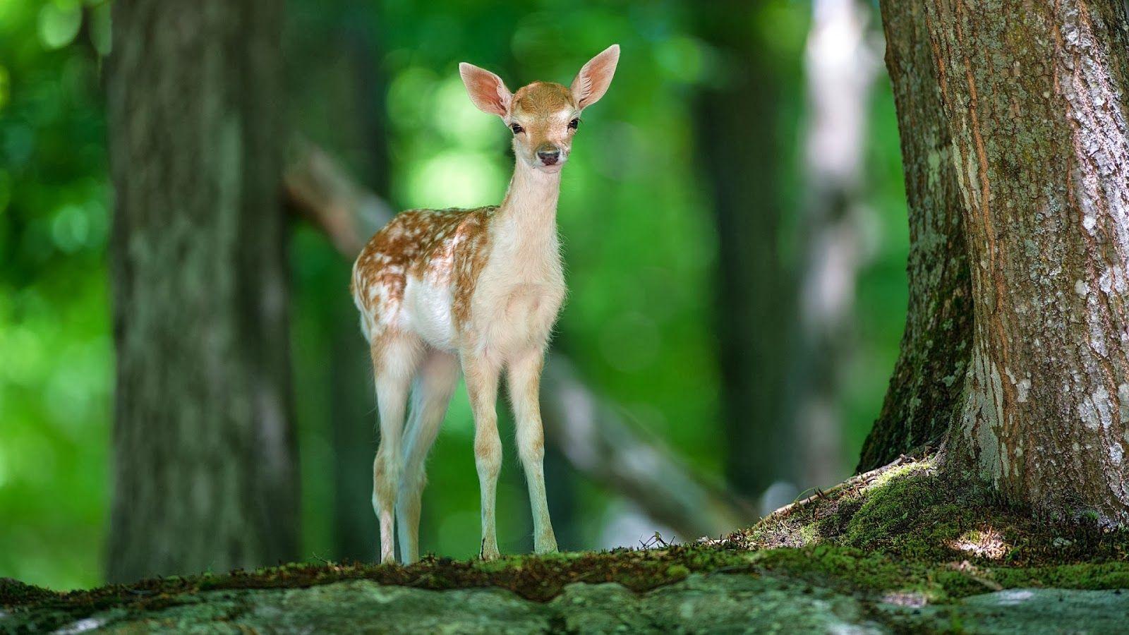 Deer In Jungle Deer Wallpaper Cute Animals Animals Beautiful