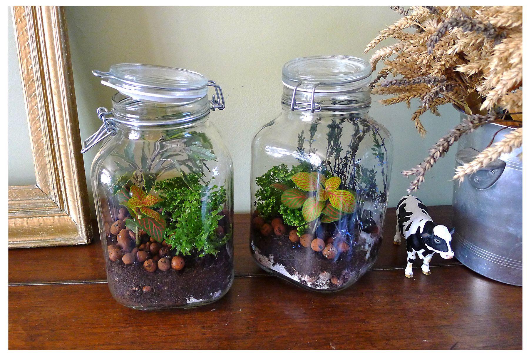 mon petit jardin dans un bocal terrariums petits. Black Bedroom Furniture Sets. Home Design Ideas