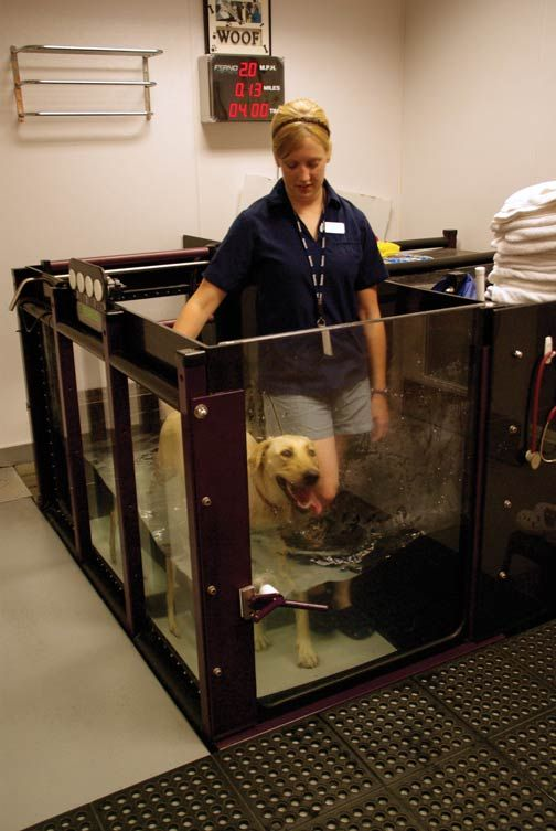 Mississauga Oakville Veterinary Emergency Hospital Referral Group Underwater Therapy Treadmill Veterinary Pet Clinic Emergency Hospital