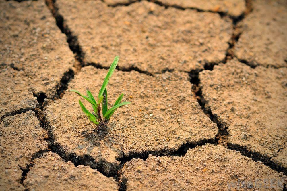 Regenerating Grassland Who Should We Blame For Climate