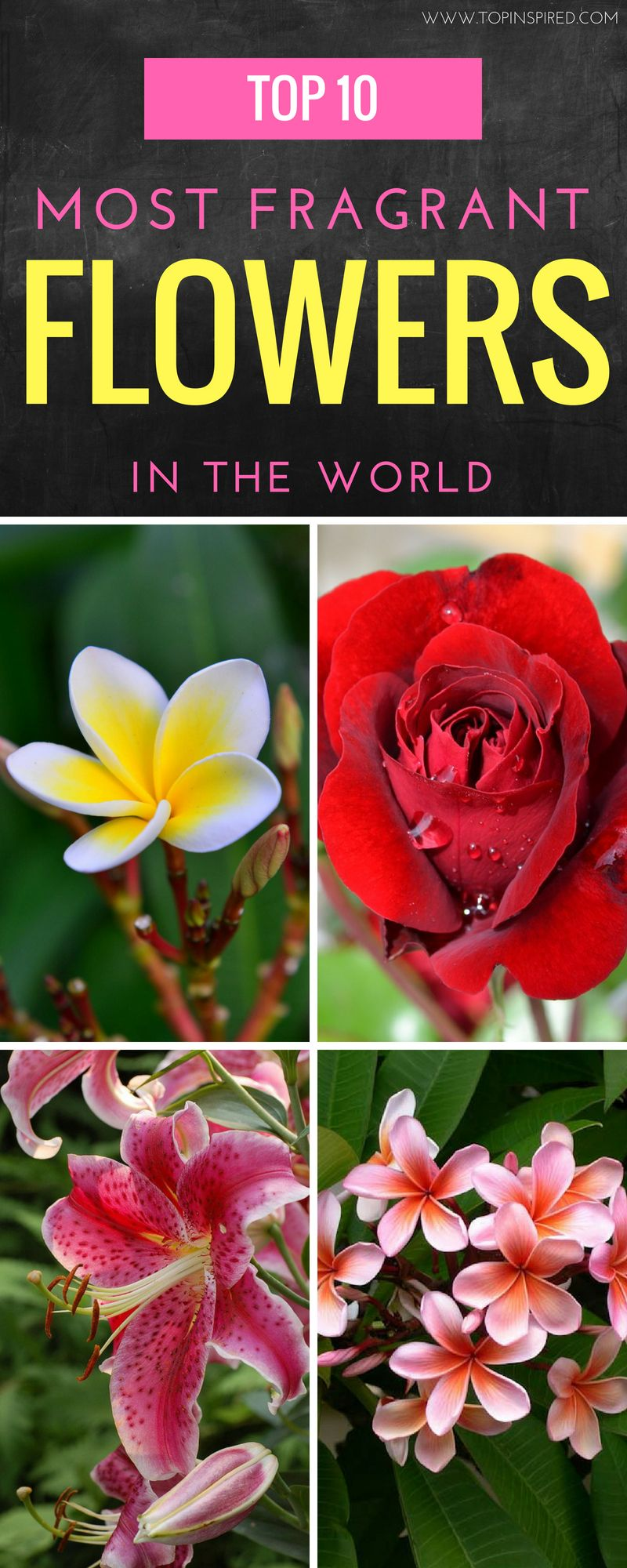 Top 10 Of The Most Fragrant Flowers In The World Late Summer