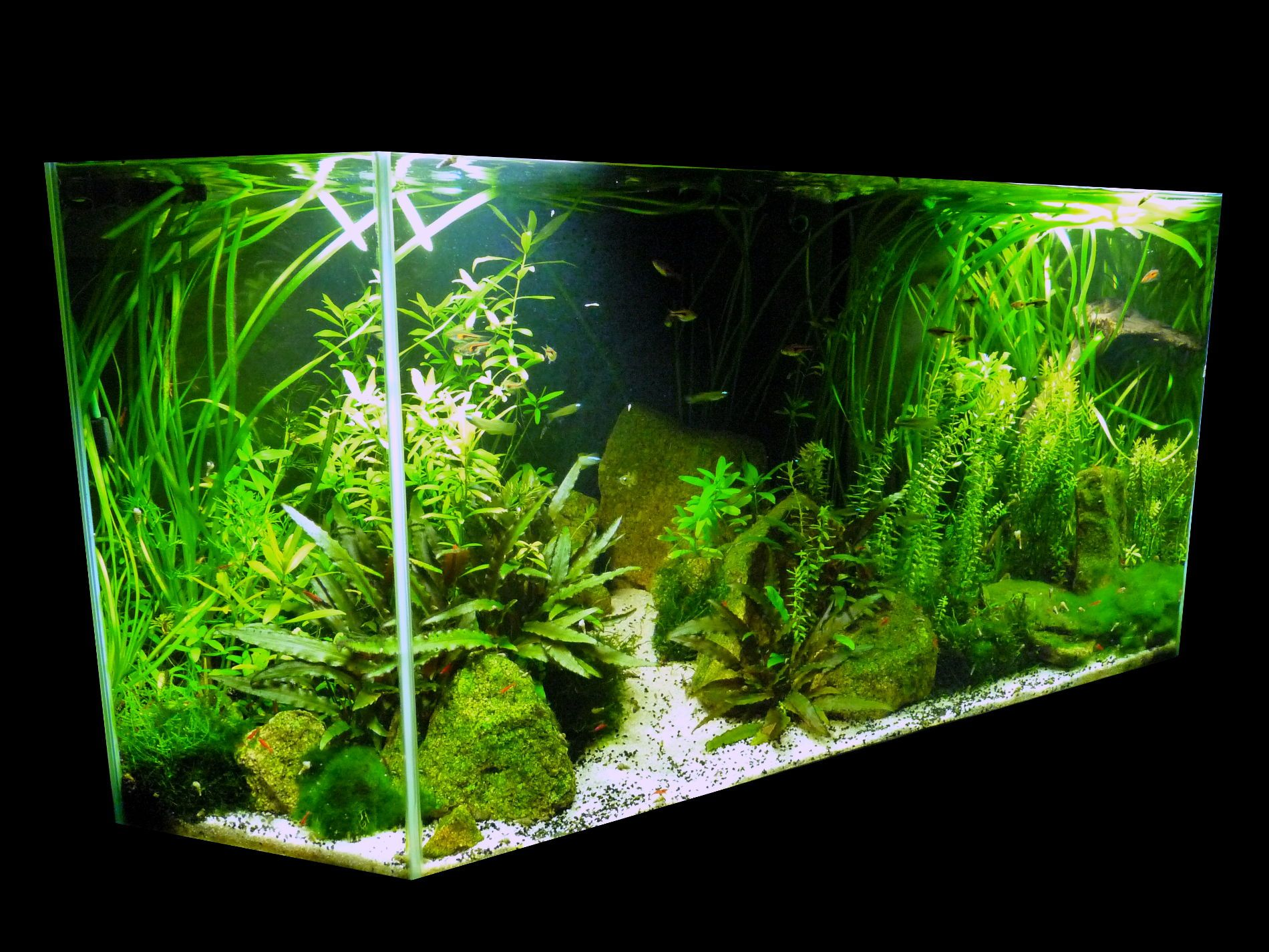 Aquarium low tech planté