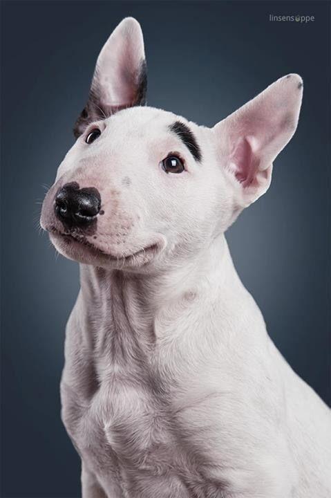 Espectaculares Fotografias De Perros De Daniel Sadlowski