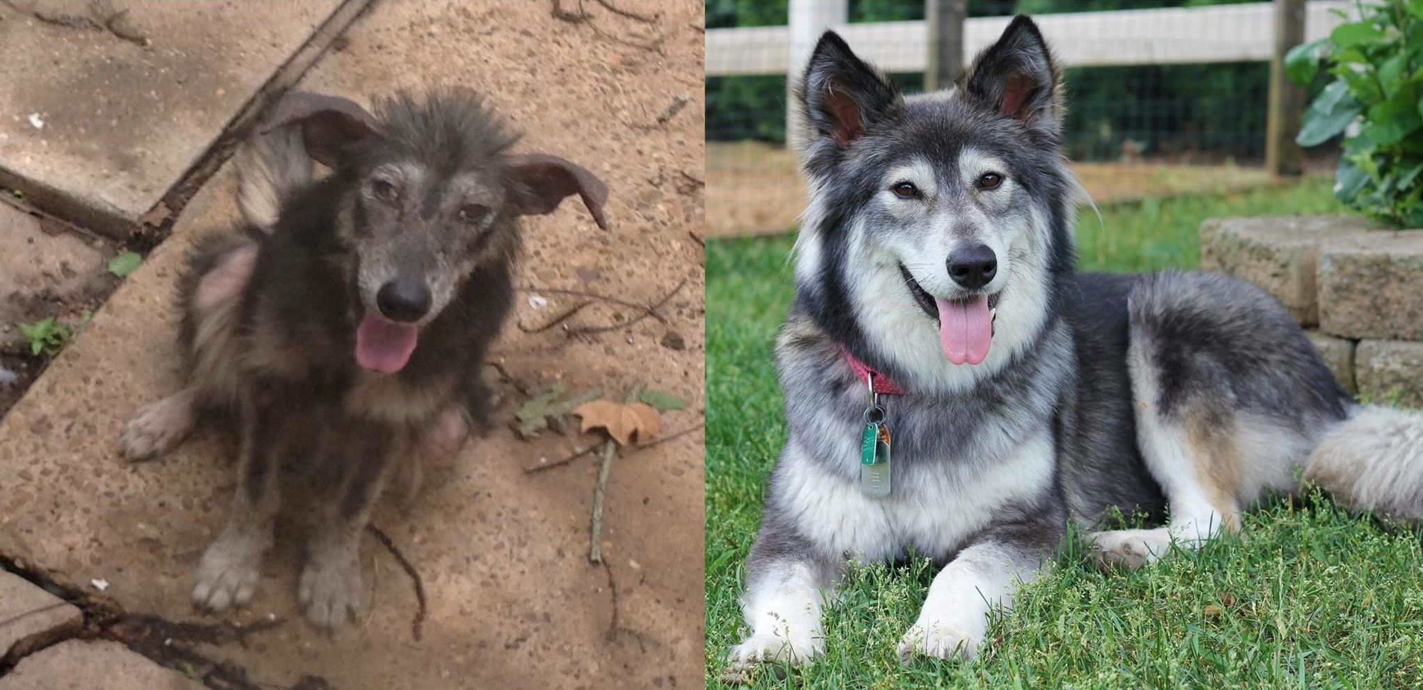 25 Utterly Heartwarming Photos Of Shelter Dogs Before After