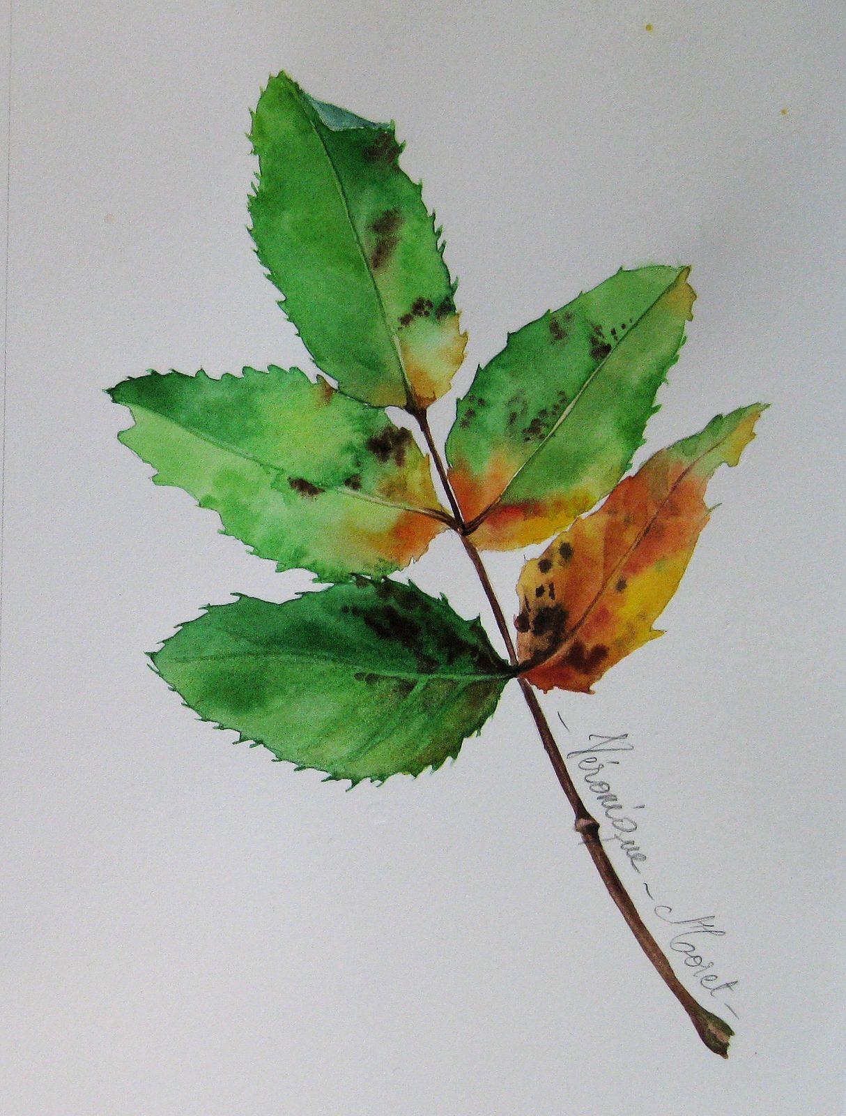 Aquarelle Sur Papier Arches Satine 300g Plant Leaves Plants Flora