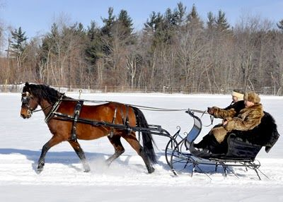 I Would Love To Ride In A One Horse Open Sleigh Pics Horses