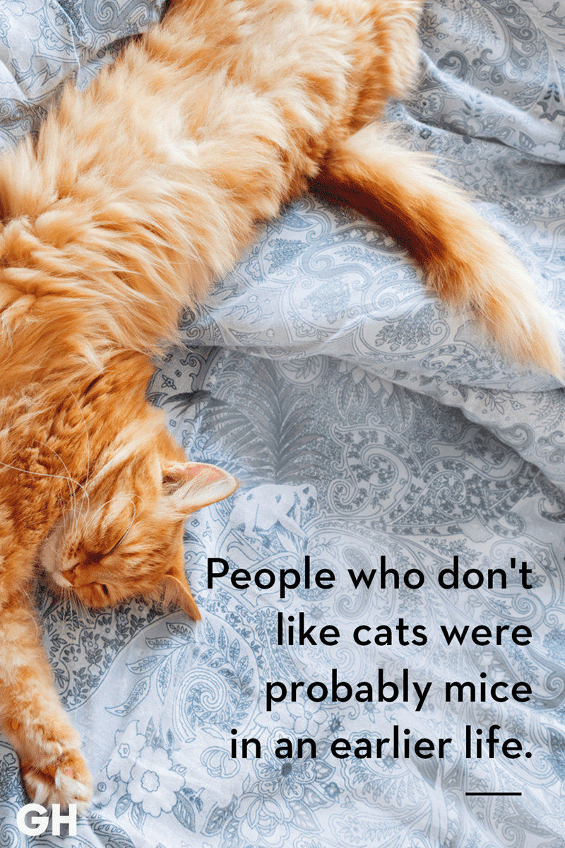 Catch 22 Cat Quotes Sum Up Cats Purr Fectly In 2020 Kittens Funny Cat Quotes Cat Quotes Funny