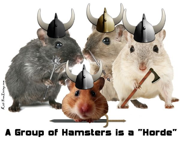 A group of hamsters is a horde. Who knew.