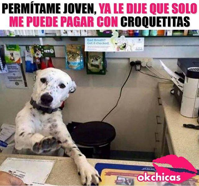 Y Tal Vez Algo De Caricias Animal Memes Funny Animal Memes Work Memes