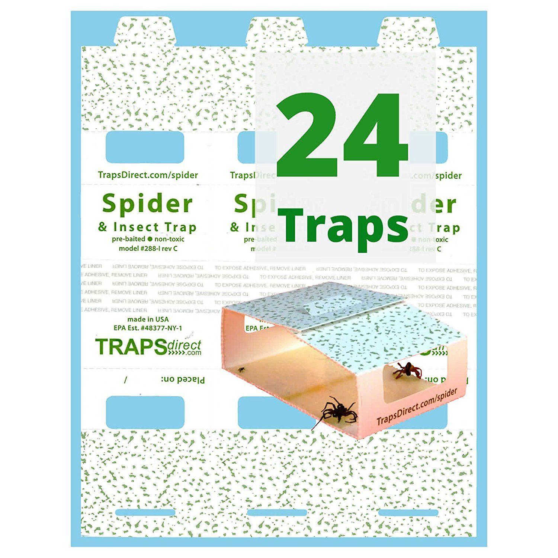 how to trap or kill armadillos