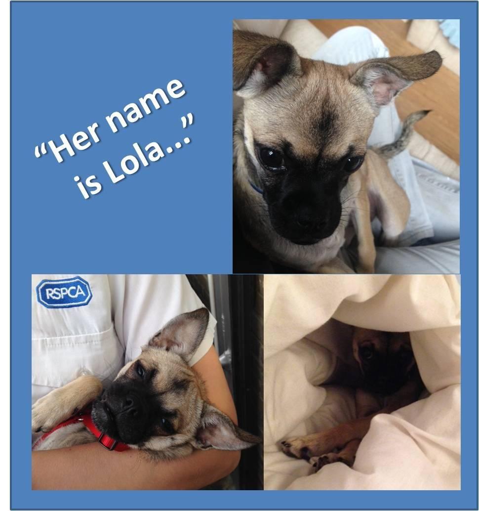 Rspca Hillingdon On Adopt Them Don T Kill Them Pet Adoption