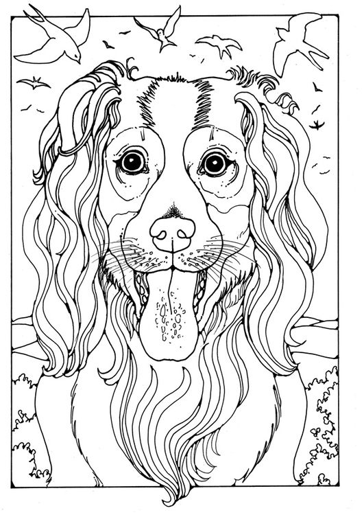 Coloring page collie | dog patterns | Pinterest | Mandalas niños ...