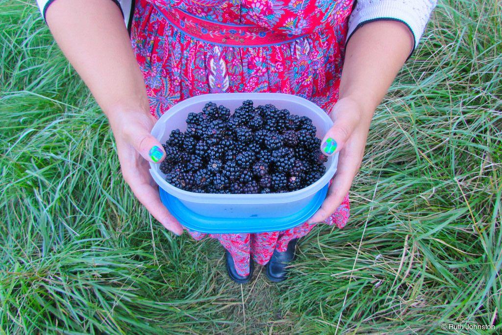 Blackberry Picking. Blackberry picking, Blackberry