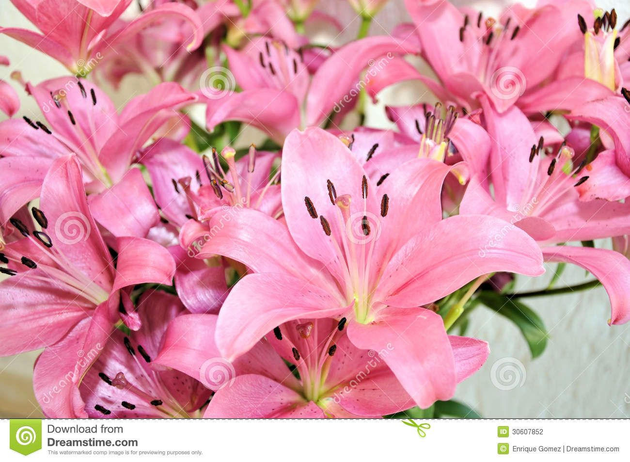 Lily Flowers Download From Over 36 Million High Quality Stock