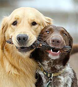sharing friends