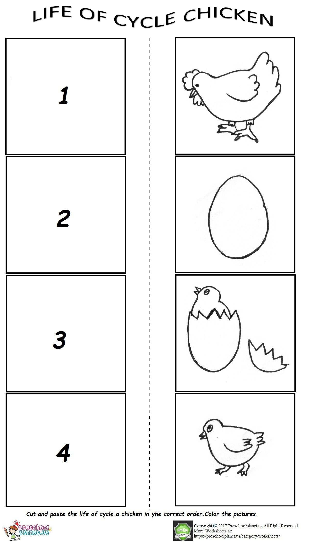 Life Of Cycle Chicken Worksheet For Preschoolers