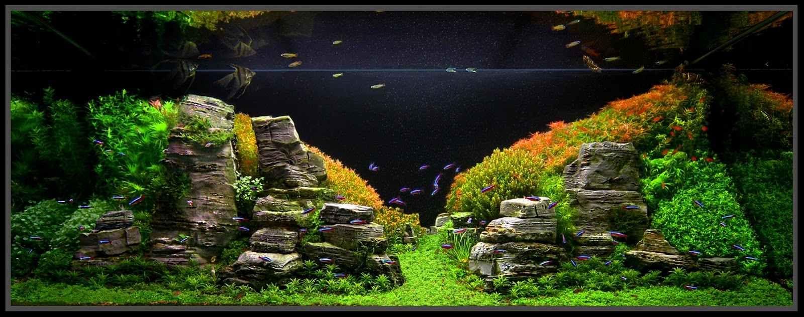 colorful | aquascapes | pinterest | aquariums, fish tanks and