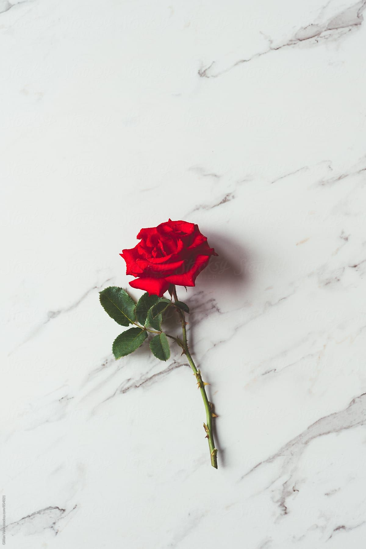 Red Rose On A Marble Background Download This High Resolution