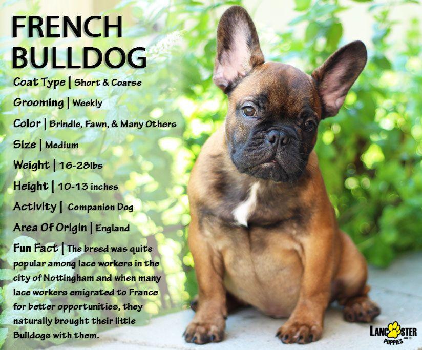 Pin By Cheryl Cochran On Animals French Bulldog Puppies Bulldog
