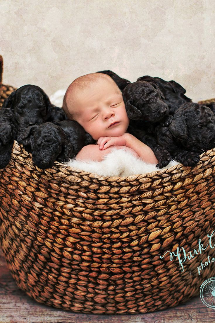 Baby and puppies born on same day star in ridiculously