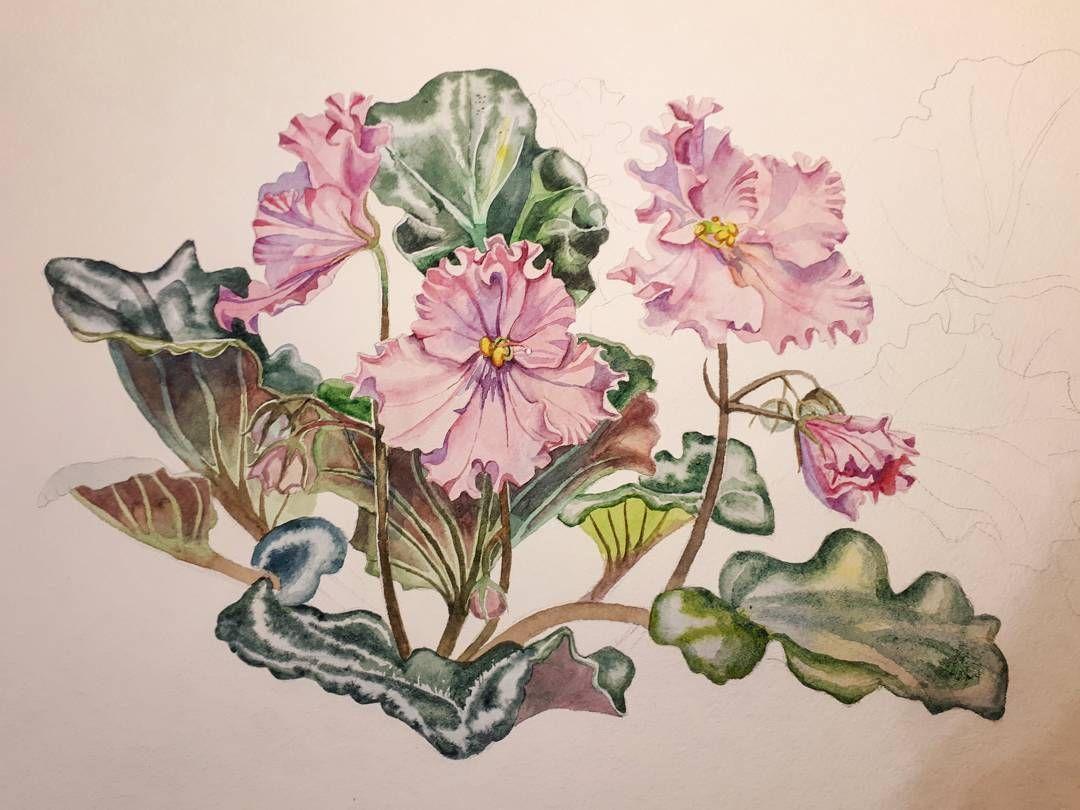 Рисунки фиалки акварелью