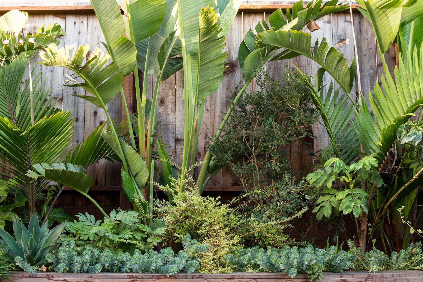 Designer Profile Talc Studio Pocket Garden Tropical