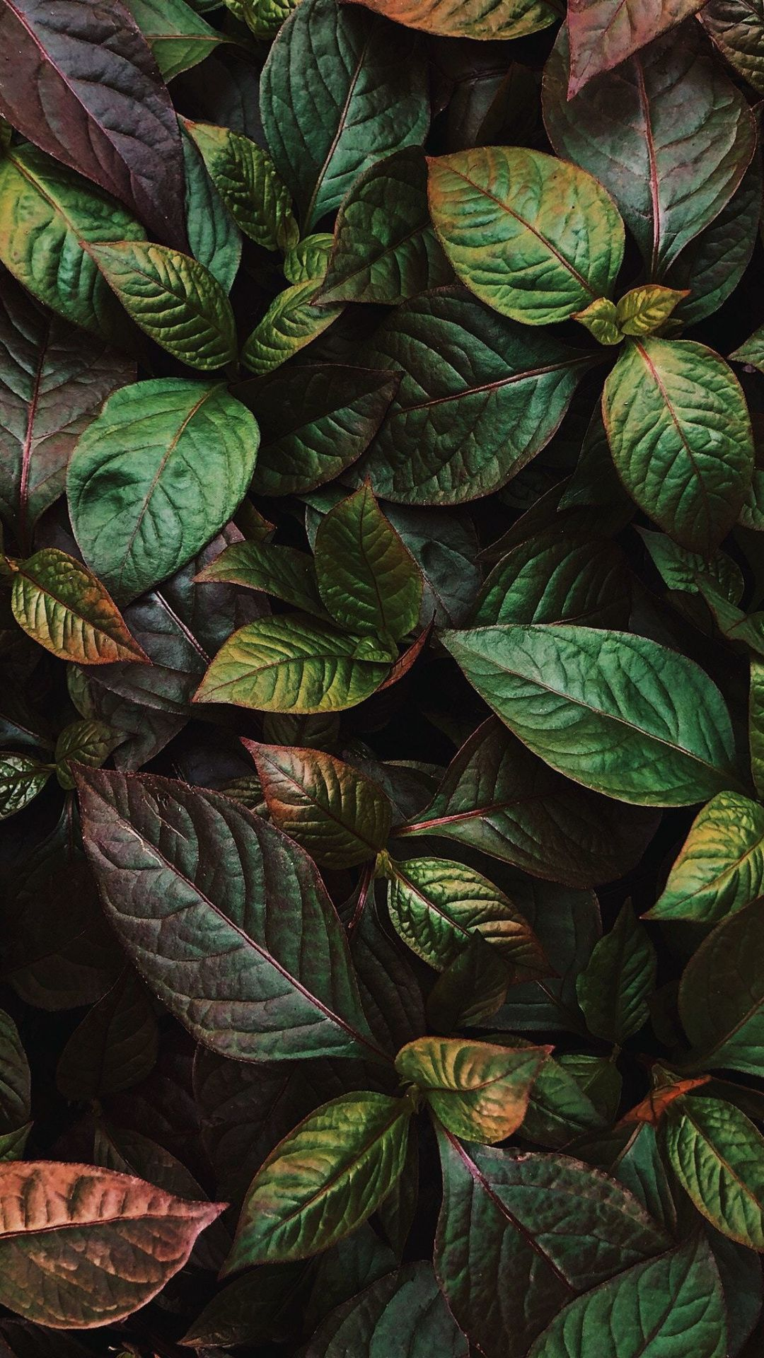 Green Leaves Plants Fresh Flora 1080x1920 Wallpaper Nature Wallpaper Plants Flower Wallpaper