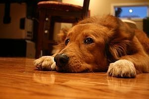How to Eliminate Dog Urine Odor Naturally.. cuz there will always be accidents!