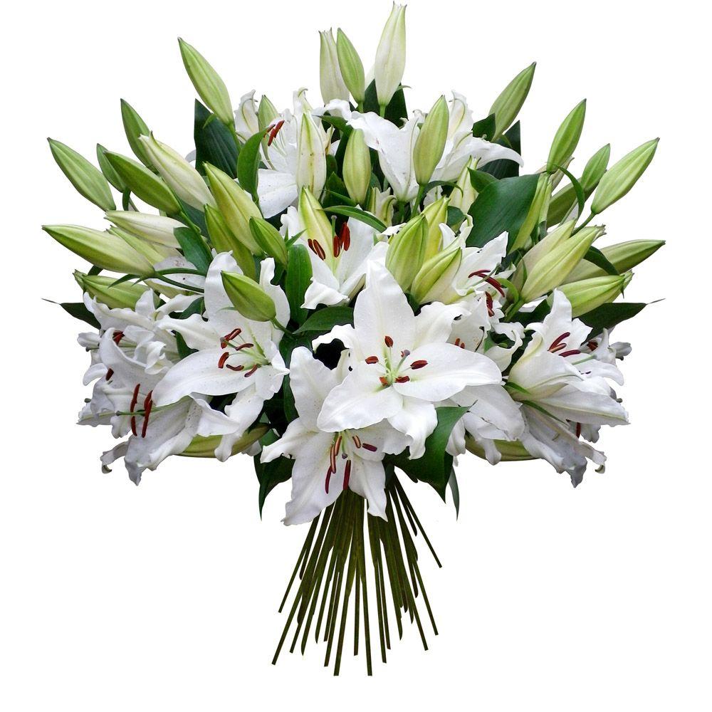 Lys blancs mood board agency pinterest plants for Bouquet de lys