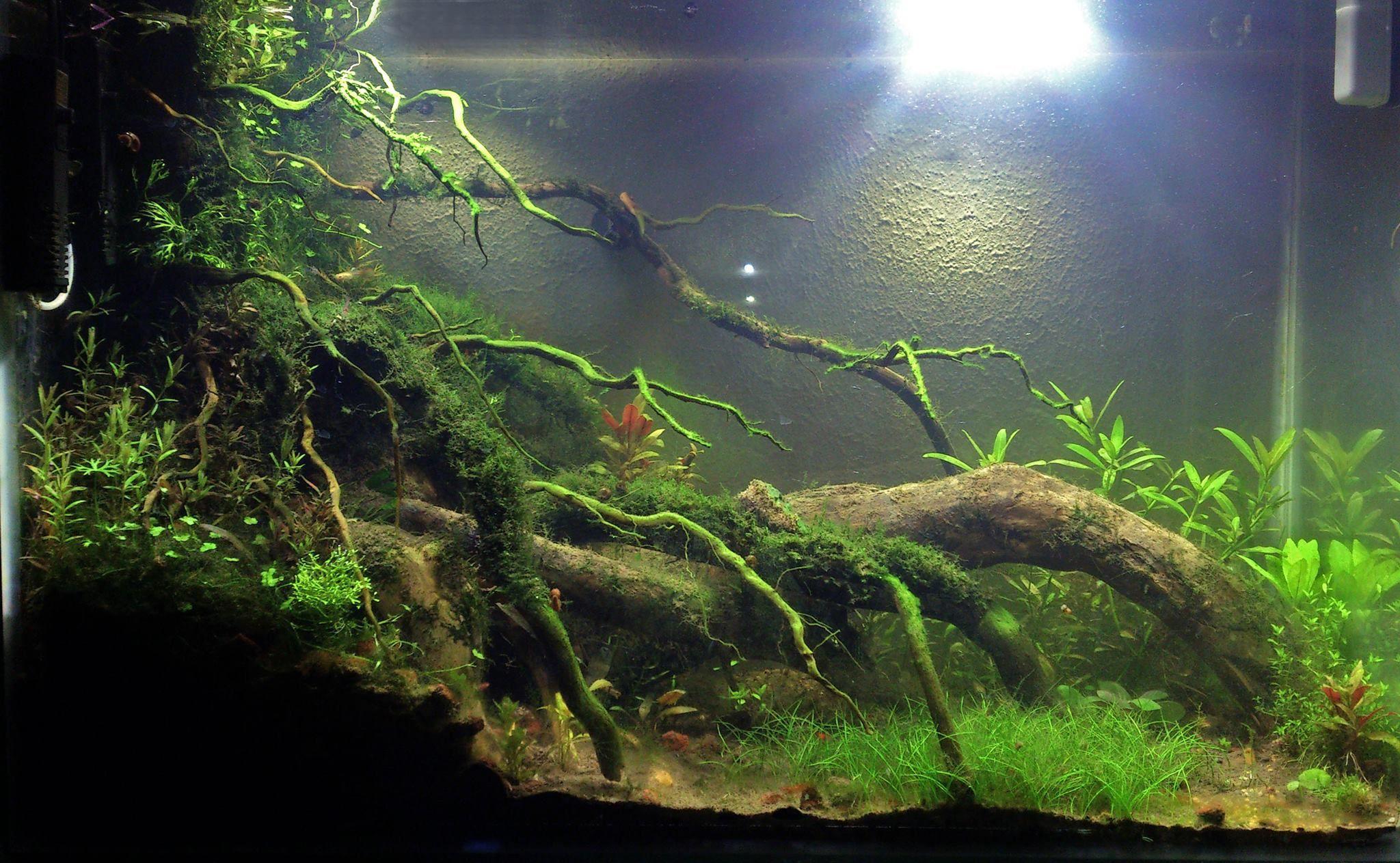 120l by axelite aquatic for Aquarium 120l
