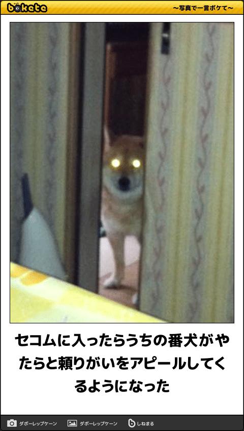 なんでこんな面白いの思いつくの 連休を笑って過ごせる犬の傑作ボケて15選 犬 写真で一言ボケて 番犬