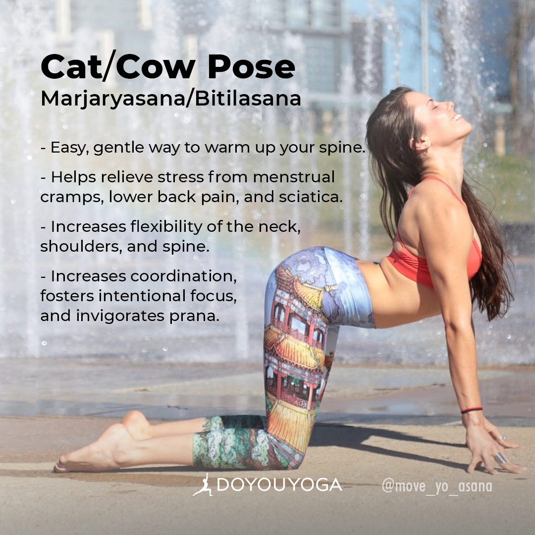 The Holistic Benefits of Cat/Cow Pose  Yoga benefits, Cat cow
