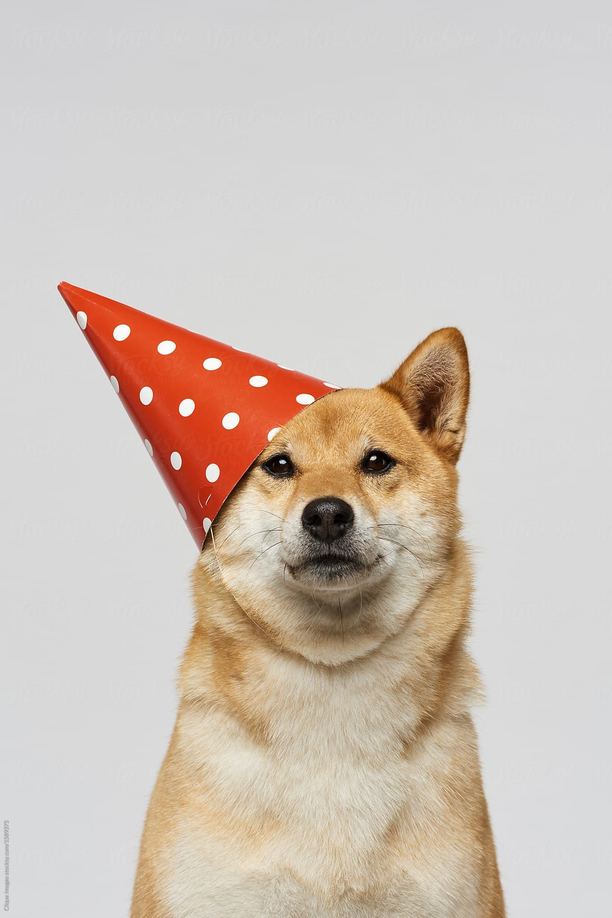 Get Ready For Crazy Party By Clique Images For Stocksy United Cute Dog Wallpaper Dog Photoshoot Dog Party