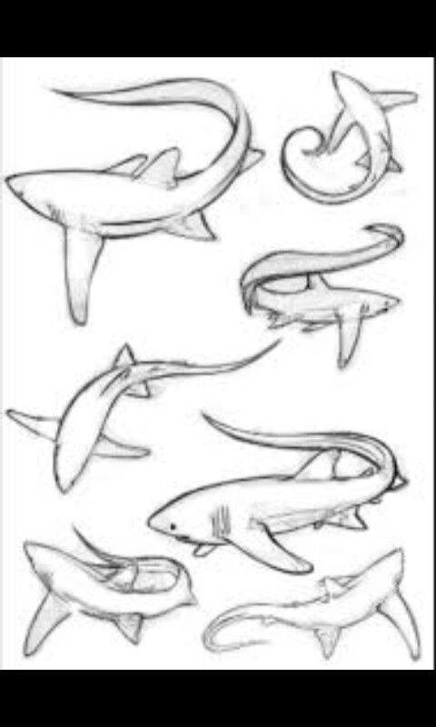 Shark Tattoo Ideas I Think I D Like One In A Plain Black Outline